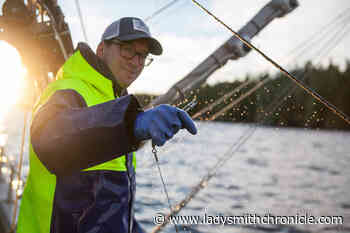 Longtime Vancouver Island fishing family hooks into local market over wholesale - Ladysmith Chronicle