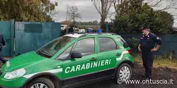 Carabinieri Forestale di Viterbo, effettuati 51 controlli in merito all'utilizzo dei fitofarmaci - OnTuscia.it
