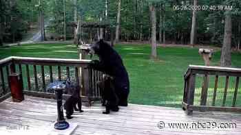 Family of bears visits Keswick Backyard - WVIR