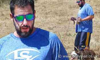 Adam Sandler and English Bulldog Babu take hike in Malibu - Daily Mail