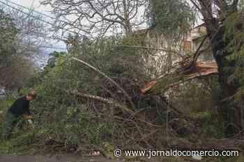 Ciclone bomba deixa estragos e pessoas desalojadas no Rio Grande do Sul - Jornal do Comércio