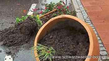 Freudenstadt: Pflanzen aus Kübeln gerissen - Freudenstadt - Schwarzwälder Bote