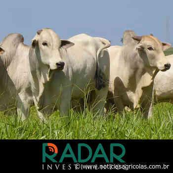 Disputa por boiadas prontas segue firme no mercado físico paulista, por Radar Investimentos - Notícias Agrícolas