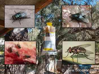 Backyard Gardener: Fly management - Prescott Daily Courier