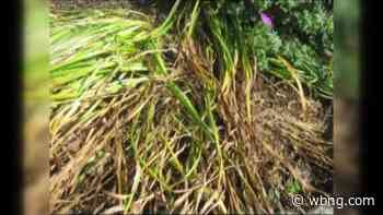 Sponsored Content Home Gardener: June 30th - WBNG-TV