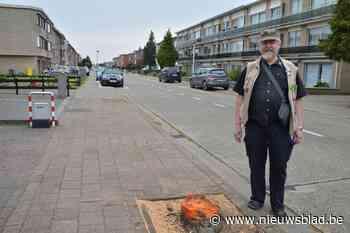 Duivenkuikens vallen uit omgehakte bomen, opvangcentrum wil ... (Kapellen) - Het Nieuwsblad