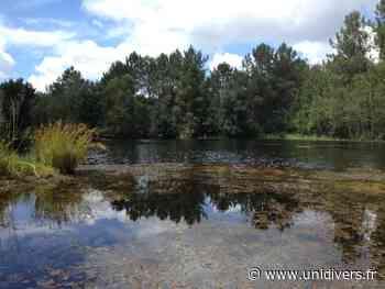 Bains de forêt vendredi 10 juillet 2020 - Unidivers