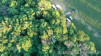 Hang glider pilot rescued from trees near Elmira - CTV News