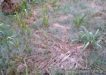 Geada fraca é registrada em Campo Bom; frio se mantém e há risco de chuva forte no Estado - Jornal VS
