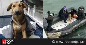 ¡Salvado! Armada rescata a perrito de temporal en bahía de Talcahuano - RockandPop