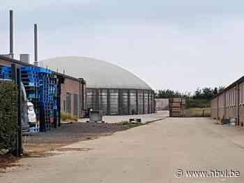 Omgevingsvergunning varkensbedrijf Wauters Enegy vernietigd na beroep van gemeente - Het Belang van Limburg