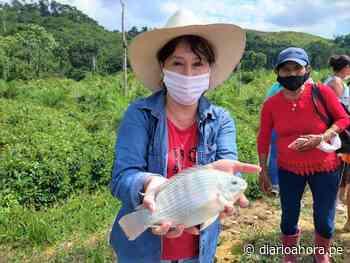 Piscicultores de Uchiza promovidos por Devida inicialaron primera cosecha de tilapias - DIARIO AHORA