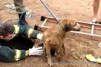 Cachorro cai em bueiro e é resgatado por bombeiros em Extremoz; veja vídeo - Tribuna do Norte - Natal