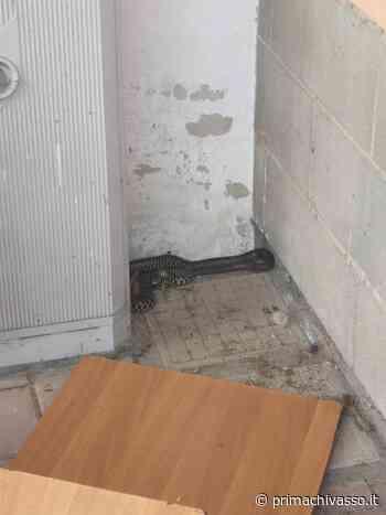 Serpente recuperato nel Palazzetto dello Sport di Brandizzo - Prima Chivasso