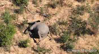 Botswana Investigates 'Mysterious Deaths' of 275 Elephants
