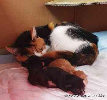 Kittens gedumpt in doos voor ophaling karton, maar buren kunnen het herenigen met mama