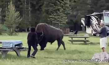 Moment 72-year-old camper advances on a bison before being bored