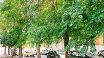Decoro urbano, Fare Grosseto: «Riqualificare la piazza non può significare tagliare 32 olmi - IlGiunco.net