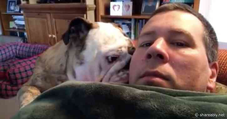 Bulldog throws adorable tantrum after being told he can't lay on top of his owner