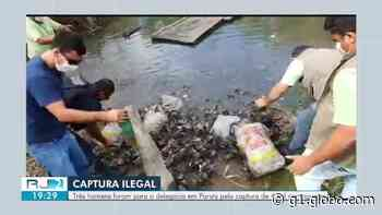 Quatro mil caranguejos são devolvidos ao mangue em Paraty - G1