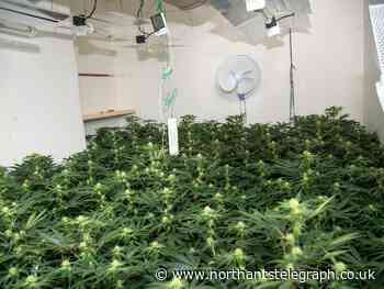 Police bust ANOTHER cannabis farm in Northampton after being called to attempted burglary - Northamptonshire Telegraph