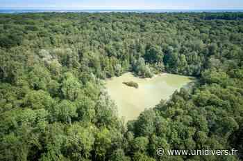 La forêt de Carnelle au départ de Viarmes Gare de Viarmes jeudi 16 juillet 2020 - Unidivers