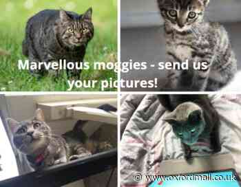 Send us purrfect pictures of your marvellous moggies