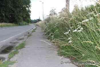 Pepingen ziet vroeger grasmaaien langs fietspaden niet zitte... (Pepingen) - Het Nieuwsblad