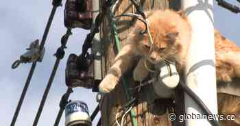 Catastrophe averted: kitty stuck atop pole in northeast Calgary rescued by firefighters