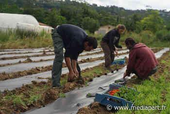 A Mouans-Sartoux, l'agriculture municipale a mis les cantines au régime bio - Mediapart