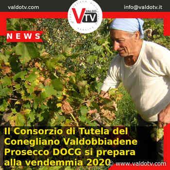 Il Consorzio di Tutela del Conegliano Valdobbiadene Prosecco DOCG si prepara alla vendemmia 2020 - Valdo Tv - Organizzazione Giornalistica Europea