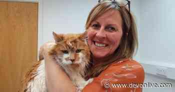 World's 'oldest cat' from Exeter dies aged 31 - Devon Live