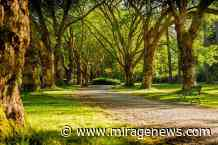 Exeter in global top five for research on green space and public health - Mirage News