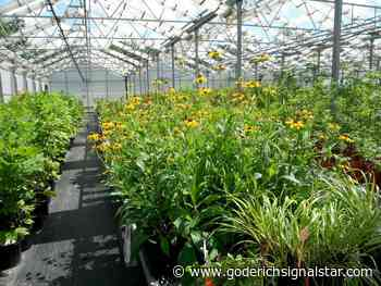 Enthusiasm for native plants - Goderich Signal Star