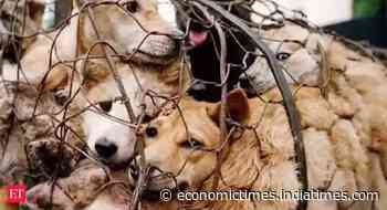 Humane Society International, People for Animals welcome Nagaland dog meat ban - Economic Times