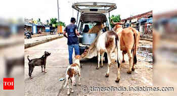 Chennai: Activists rescue starving animals - Times of India
