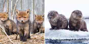 A nature photographer captures foxes, otters, and other baby animals in their natural habitats - Insider - INSIDER