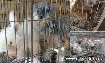Coronavirus China: 'Pet' market sells live animals for meat - Daily Mail