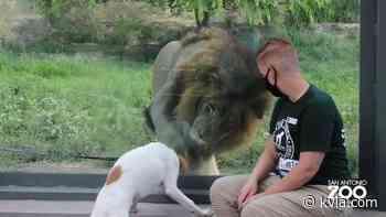 WATCH: Curious foster dogs and kittens meet San Antonio Zoo animals - KVIA El Paso