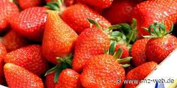 Wirtschaft : Keine Erdbeerplantage in Mühlanger - Mitteldeutsche Zeitung