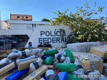 A assustadora quantidade de maconha que a CPE Trindade encontrou em distrito de Anápolis - Portal 6 Anápolis