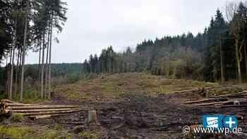 Attendorn: Borkenkäfer-Schäden schon jetzt größer als 2019 - WP News