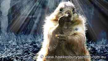 The Informer: Paris Hilton, dimante masks and Groundhog Day - Hawkesbury Gazette