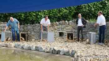 Nach Umbau im Zoo Hoyerswerda: Wellness für die Pinguine - MDR