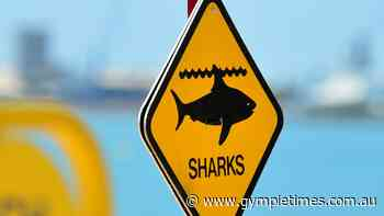 BREAKING: Shark bite reported at Fraser Island - Gympie Times