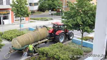 Stadtgrün Senftenberg/Großräschen: Dürreschäden reißen Löcher in die Stadtkassen - Lausitzer Rundschau