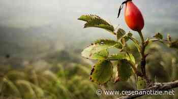 Refashion propone le fotografie di Tomas Maggioli a Savignano sul Rubicone - CesenaNotizie.net - cesenanotizie.net