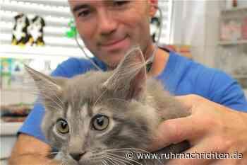 Was am Donnerstag in Schwerte wichtig wird: Teure Corona-Tests für Haustiere - Ruhr Nachrichten