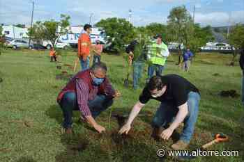 Arranca Raúl Morón primer reforestación urbana 2020, en colonia Francisco Zarco - Altorre