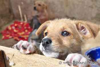Prefeitura de Arapoti cria Conselho Municipal de Proteção aos Animais - Folha Extra